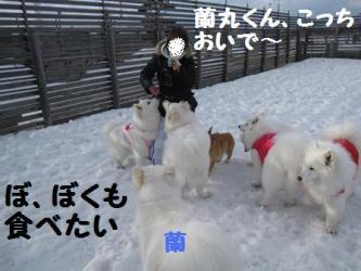 2009 3 15 dogstock11
