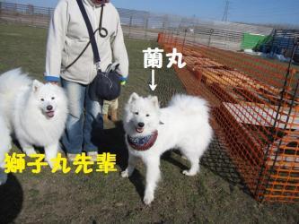 2009 4 5 dogstock1