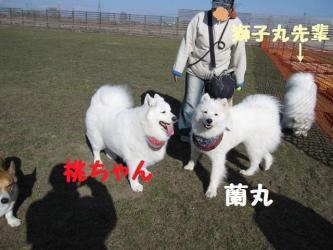 2009 4 5 dogstock2