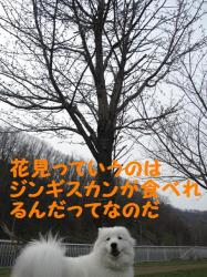 2009 4 25 nisino4