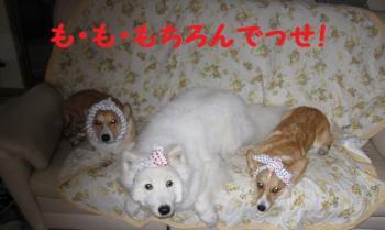 2009 4 26 jakoran5