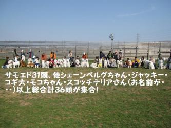 2009 4 29 ofukai1