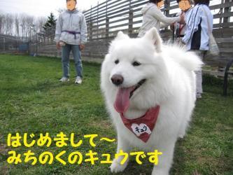 2009 5 3 dogstock
