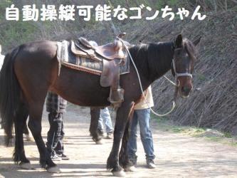 2009 5 6 haruka2