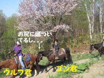 2009 5 6 haruka5
