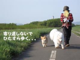 2009 5 16 toyohira5