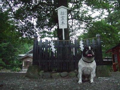 2009_0814鹿児島0049