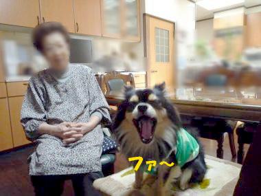 おばあちゃん鯉2