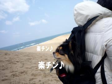 鳥取砂丘@鯉7