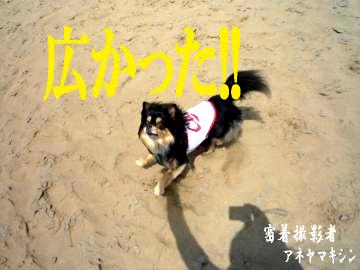 鳥取砂丘@鯉4