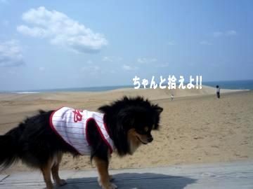鳥取砂丘@鯉3