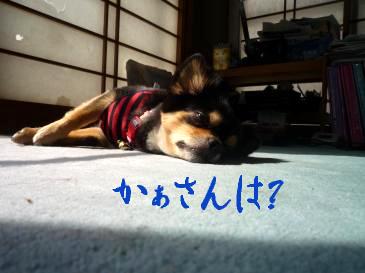 鯉太郎@はぶてる