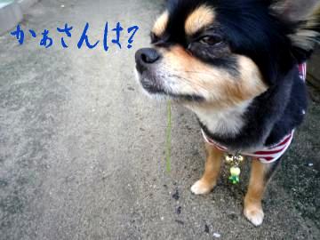 鯉太郎@はぶてる2