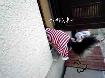 鯉太郎@草を求めて三千里3