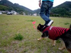 鯉太郎@心狭き旦那と散歩5