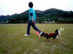 鯉太郎@心狭き旦那と散歩4