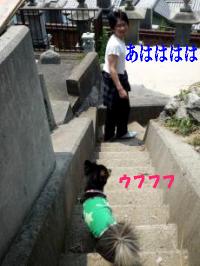 鯉太郎@心狭き旦那と散歩2
