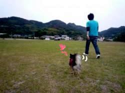 鯉太郎@心狭き旦那と散歩3