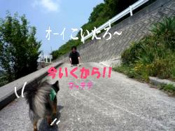 鯉太郎@心狭き旦那と散歩1