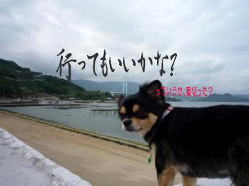 鯉ちゃん@海3
