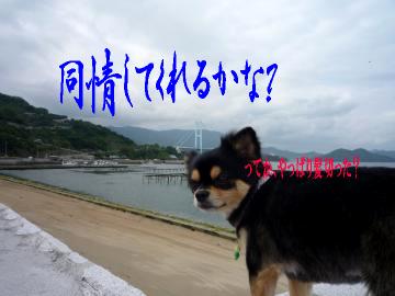 鯉ちゃん@海7