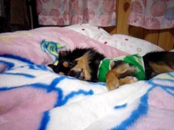 鯉ちゃん@寝る