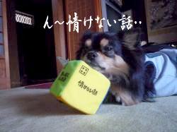 鯉太郎@サイコロ1