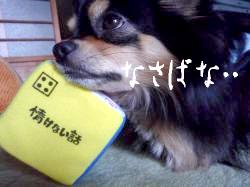 鯉太郎@サイコロ3