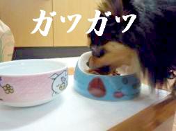 鯉ちゃん@食事の癖