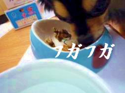 鯉ちゃん@食事の癖2