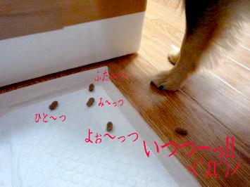 鯉ちゃん@食事の癖3