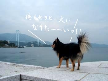 鯉太郎@多忙2