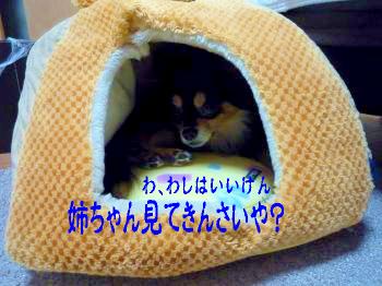 鯉太郎@不思議3