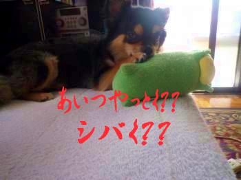 外耳炎@鯉太3
