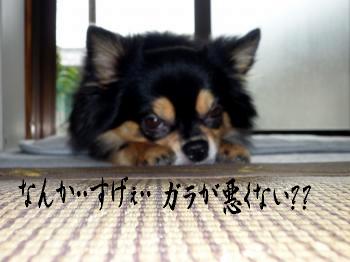 鯉太郎@夢見が最悪4