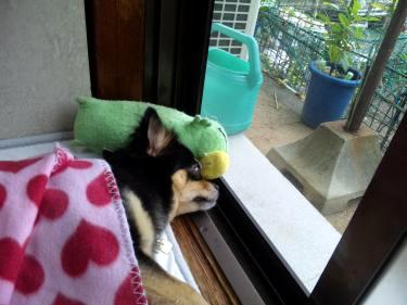 鯉太郎@憂鬱