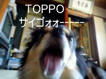 鯉太郎@トッポ2