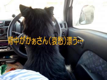 鯉太郎@肩乗り4