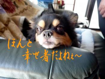 残念なダンナ@鯉太郎2