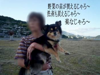 つぶやき@鯉太郎3