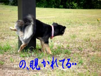 つぶやき@鯉太郎1