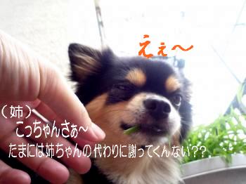 罰@鯉太郎1