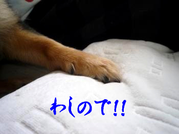 こっちゃんのお気に入り@鯉太郎2