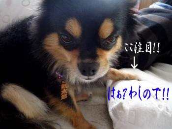 こっちゃんのお気に入り@鯉太郎4