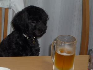 ココロとビール
