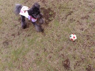 ボールで遊ぶ