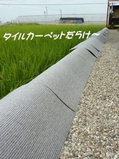 010_20110726095729.jpg