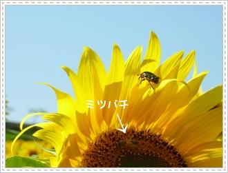 093_20111026122057.jpg