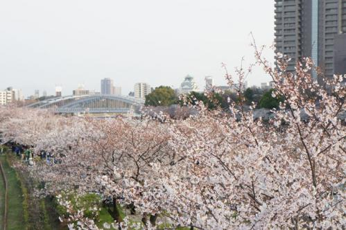 2012年桜之宮公園