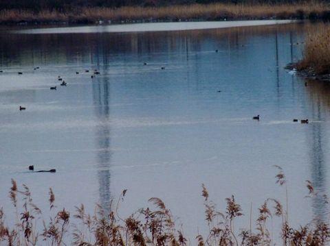 水鳥が群れ遊び 日没と共に河口へと帰っていく、